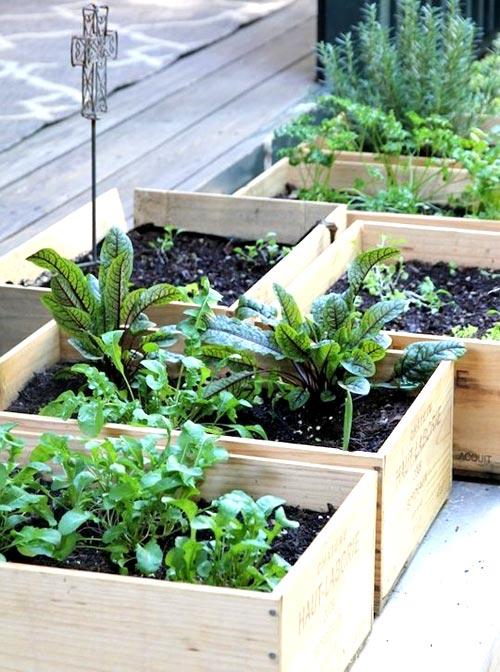 trồng rau trong thùng gỗ