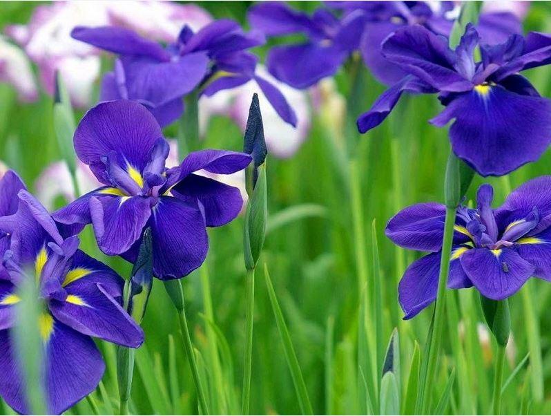 Mệnh Thủy chuyển nhà nên chưng hoa gì rước tài lộc về nhà?