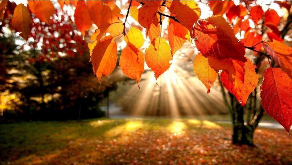 Lá vàng bay giữa mùa thu